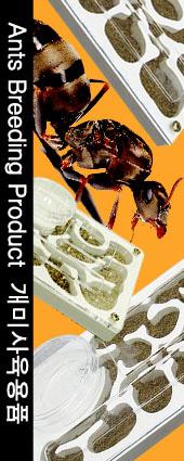 개미사육장
