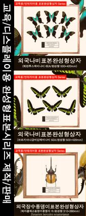 곤충표본완성형제작