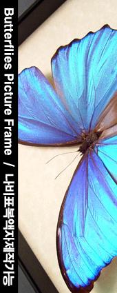 나비표본제작