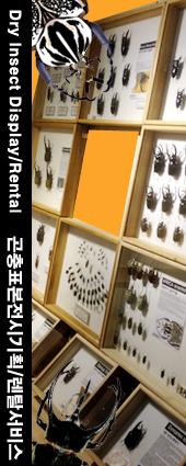 곤충표본전시/렌탈
